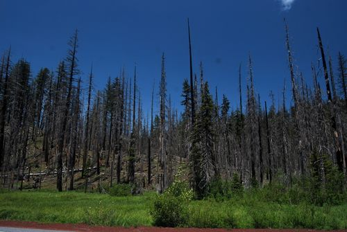 trees left after the 2003 B&B fire