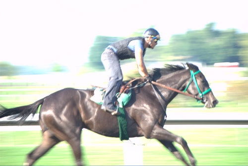 black thoroughbred racehorse. (the thoroughbred capital